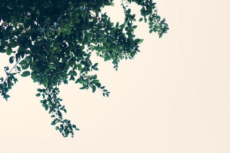 Leaves Beauty