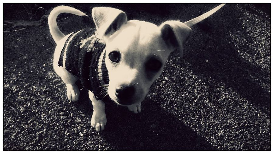 At The Park Our Baby My Baby❤ Black Nose Blackandwhite Photography Look At Me!