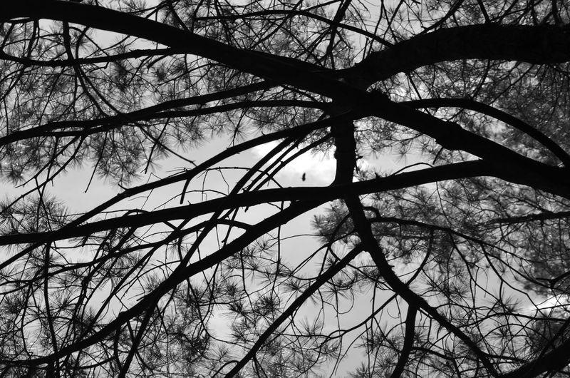 Tree Branch Bare Tree Silhouette Sky Woods