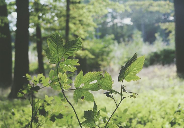 Nature Forest Woods Green Leaves Brightness Canonphotography Canon Rebel XT Canon Eos Rebel Xt Walking Around EyeEm Best Shots Getting Inspired Taking Photos Hello World Check This Out Beautiful EyeEm Nature Lover Trees My Best Photo 2015