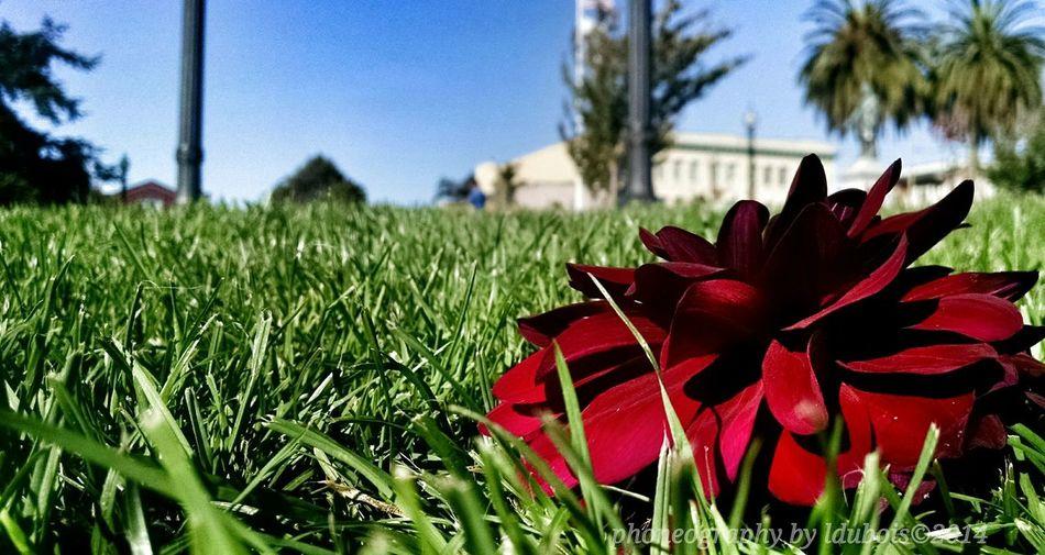 Ldubois Humboldt County Flowers