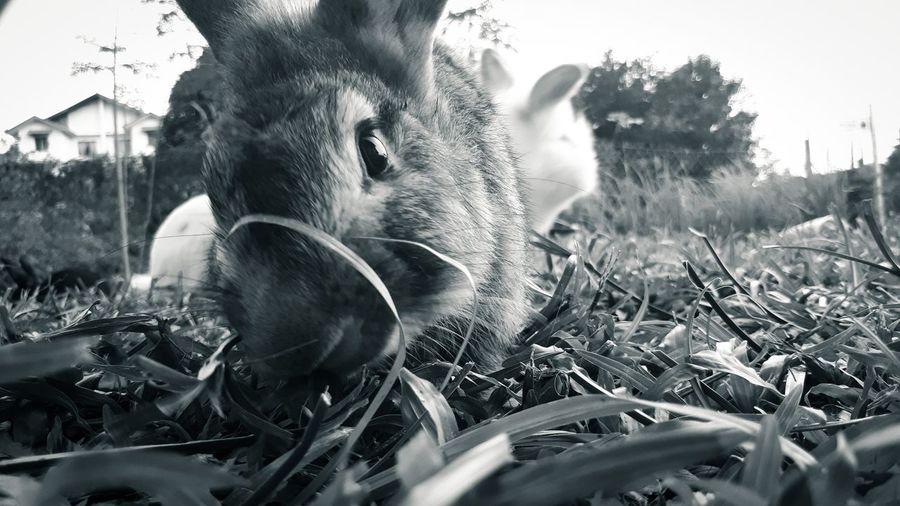 Rabbit Stare...