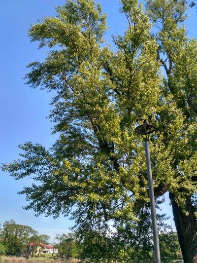 Tree Nature Low Angle View Growth No People Day Beauty In Nature Forest Outdoors Branch Sky