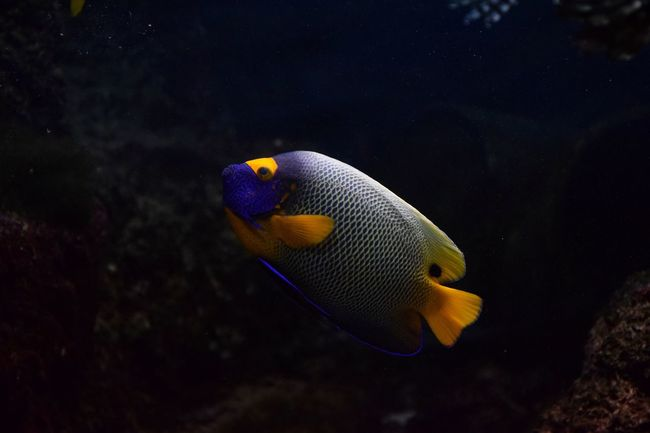 colors in big blue Colorful Saltwater Instafish Photooftheday Underwater Animals In The Wild Animal Wildlife Fish One Animal UnderSea Sea Life Side View No People Animal Themes