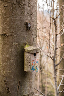Little bird table on a big old tree Attached Bare Tree Birdhouse Branch Close-up Day Focus On Foreground Hanging Hole Metal Nature No People Old Outdoors Plant Textured  Tree Tree Trunk Trunk Wood - Material