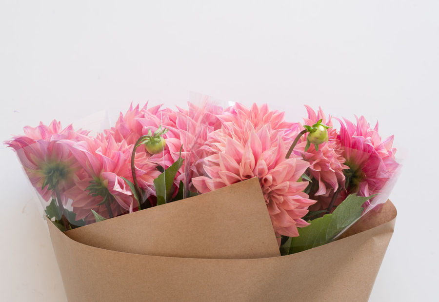 Dahlias wrapped in brown paper Beauty In Nature Bouquet Box Bunch Of Flowers Close-up Container Flower Flower Arrangement Flower Head Flowering Plant Fragility Freshness Indoors  Inflorescence Nature No People Paper Petal Pink Color Plant Studio Shot Vulnerability  White Background