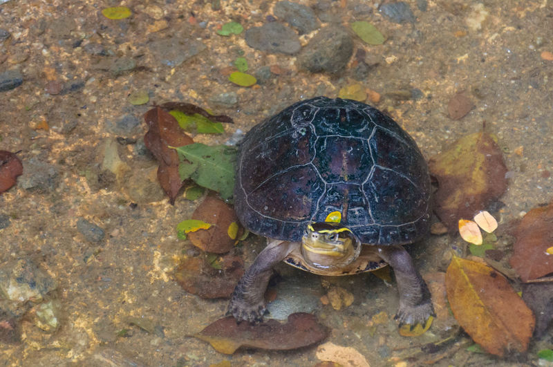 High angle view of tortoise in water