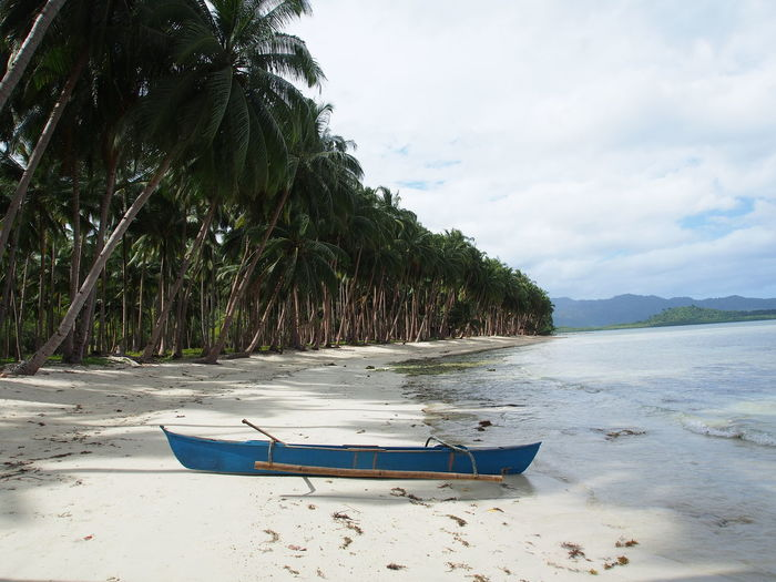 ASIA Beach Beauty In Nature Bestdestinations Boat Growth Holiday Longtail Boat Nature No People Outdoors Palm Tree Philippines Philippines Photos Sand Sea Sky Summer Summertime Transportation Traveling Travelmood Tree Trip Water