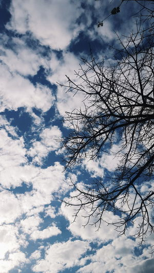 Nuvole Sky And Clouds Travel Tree Beauty In Nature Blue Blue Sky Bluesky Branch Cielo Cloud - Sky Color Day Low Angle View Nature No People Outdoors Photo Photographer Photography Photooftheday Scenics Sky Tranquility Tree EyeEmNewHere