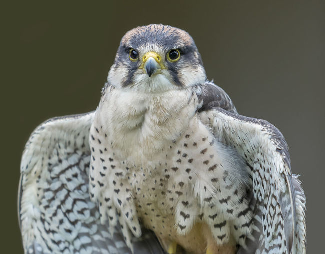 Close-Up Portrait Of Bird Perching Outdoors