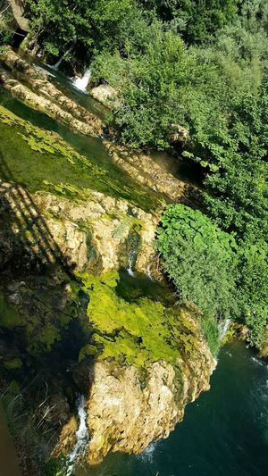High Angle View Outdoors Nature Water Close-up No People Day In Joying Life In Love With This Picture Relaxing Moments Nature Photography Chilling Tree Beauty In Nature Greenlife