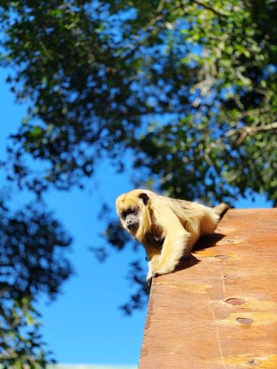 Monkey chillin Sky Nature Animals Food Wild Monkey Animals In The Wild One Animal Animal Themes Animal Wildlife Animal Tree Nature Plant Vertebrate Sunlight Low Angle View Focus On Foreground No People Day The Mobile Photographer - 2019 EyeEm Awards The Great Outdoors - 2019 EyeEm Awards