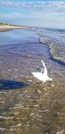 Snowy Egret Secretplaces Fragility In Nature Naturesdesign Beauty In Nature The Beauty Of Summer Time! Mylife♡ Bird Water Swimming Sea UnderSea Beach Sea Life Flamingo Animal Themes Sky
