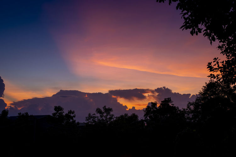 Low angle view of silhouette trees against sky during sunset