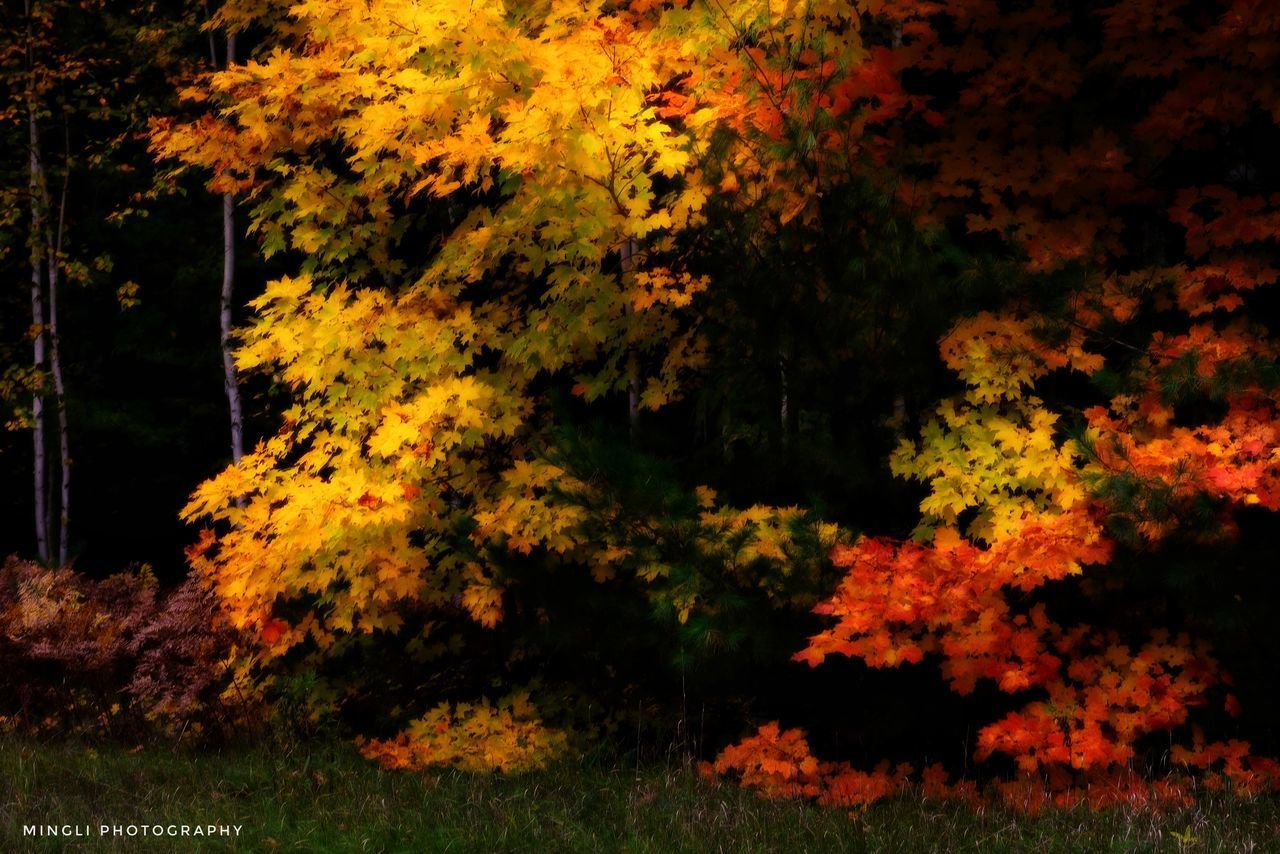 plant, beauty in nature, tree, autumn, no people, nature, change, land, growth, tranquility, outdoors, orange color, day, yellow, forest, tranquil scene, flower, field, flowering plant, scenics - nature