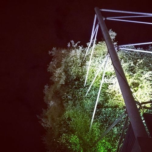 Plantes en la nuit. Latergram Murvegetal Night Leshalles
