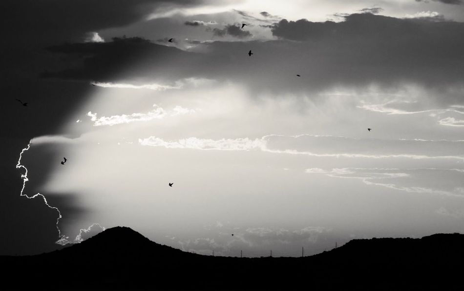 Silhouette Mid-air Cloud - Sky Flock Of Birds Beauty In Nature Sky Texas Westtexas Scenics Nature Sunset