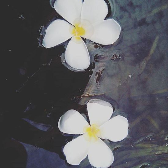 🌻 Flowers VSCO Vscocam Vscoflower beautifulflowers