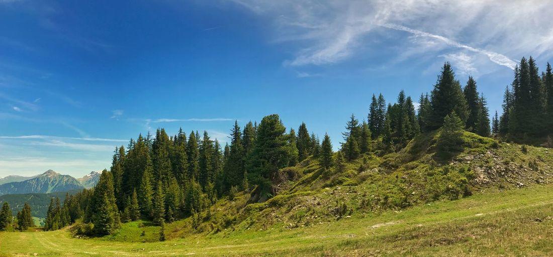 Pine trees on landscape against sky