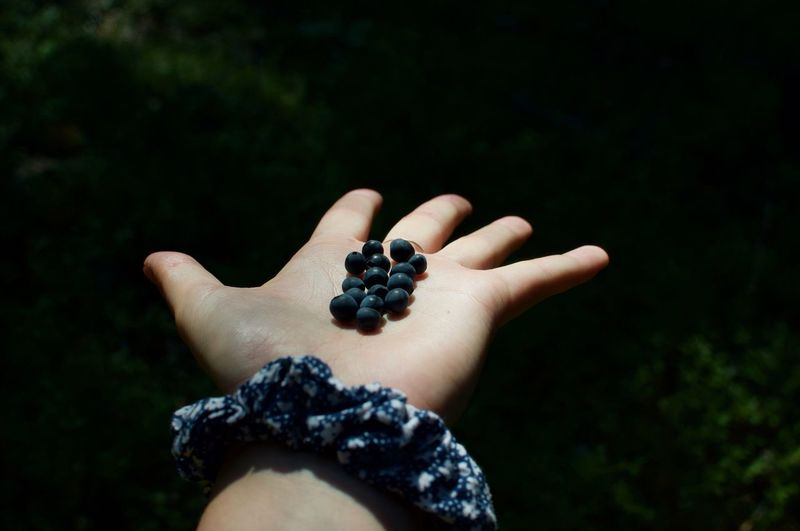 Picked berries in palm hand under a spotlight in the woods
