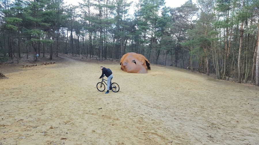 riding Bike Bicycle Riding Bike Path In Nature Forest Pathway In The Forest Man Path Sand Pine Tree Figure