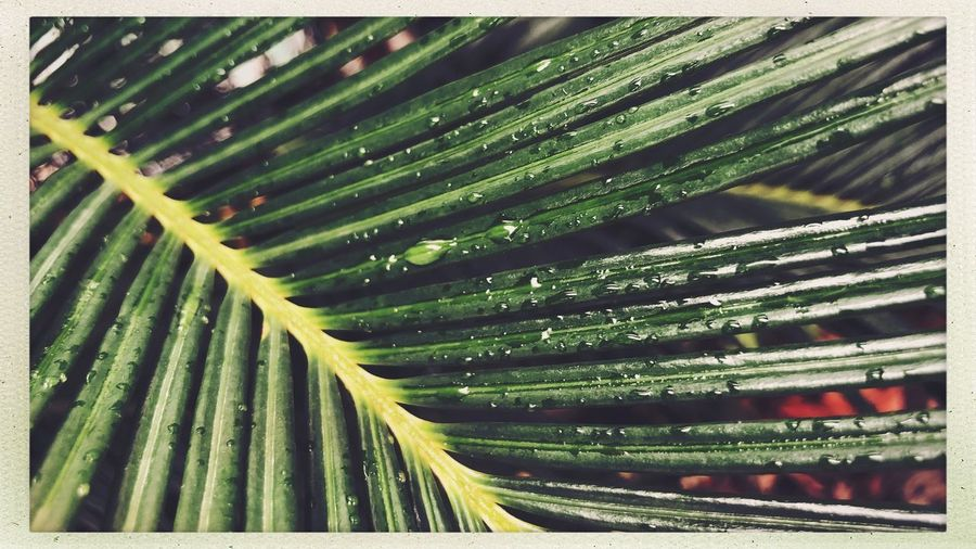 Streetphotography Citylife Shanghai Growth Green Color Transfer Print Auto Post Production Filter Plant Nature No People Leaf Full Frame Tree Day Beauty In Nature Plant Part Natural Pattern Close-up Outdoors Backgrounds Palm Tree Green Freshness