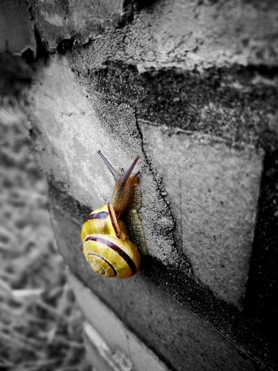 No People Black Blackandwhite Black And White Black & White Yellow Insect High Angle View Animal Themes Close-up Slug Snail Shell Antenna Animal Shell Slow Slimy Crawling