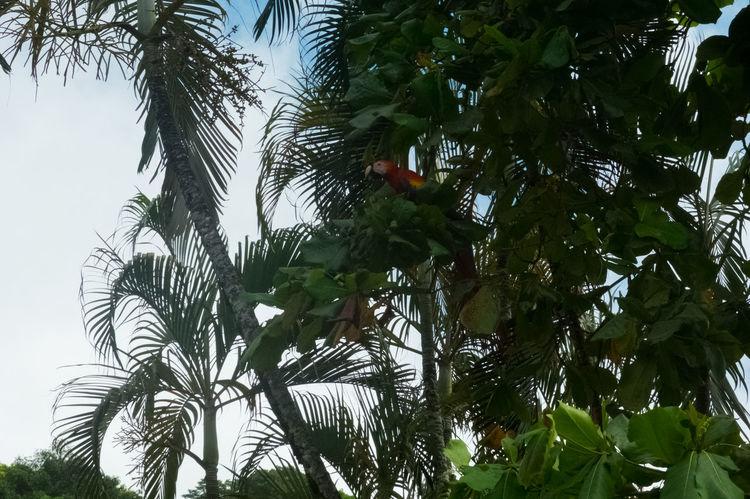 Costa Rica Nature Wildlife & Nature Ara Beach Beauty In Nature Jungle Nature Ocean Papagai Tree Wildlife
