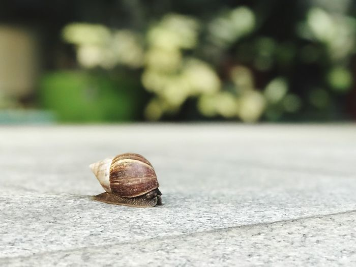 EyeEm Selects Snail One Animal Gastropod Wildlife Animal Themes Day Animals In The Wild Nature Fragility Outdoors Close-up No People