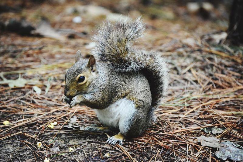 Squirrel EyeEm