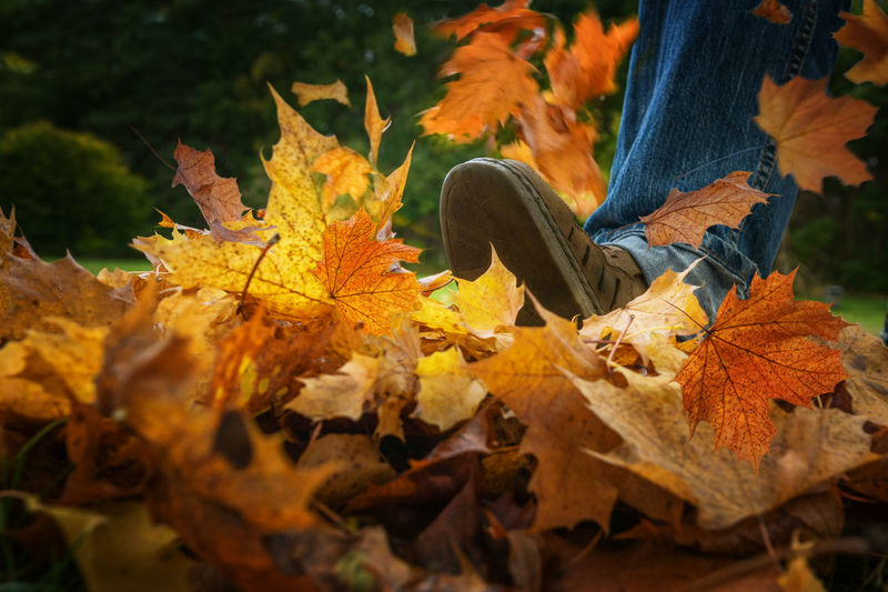 Low section of person on yellow leaves