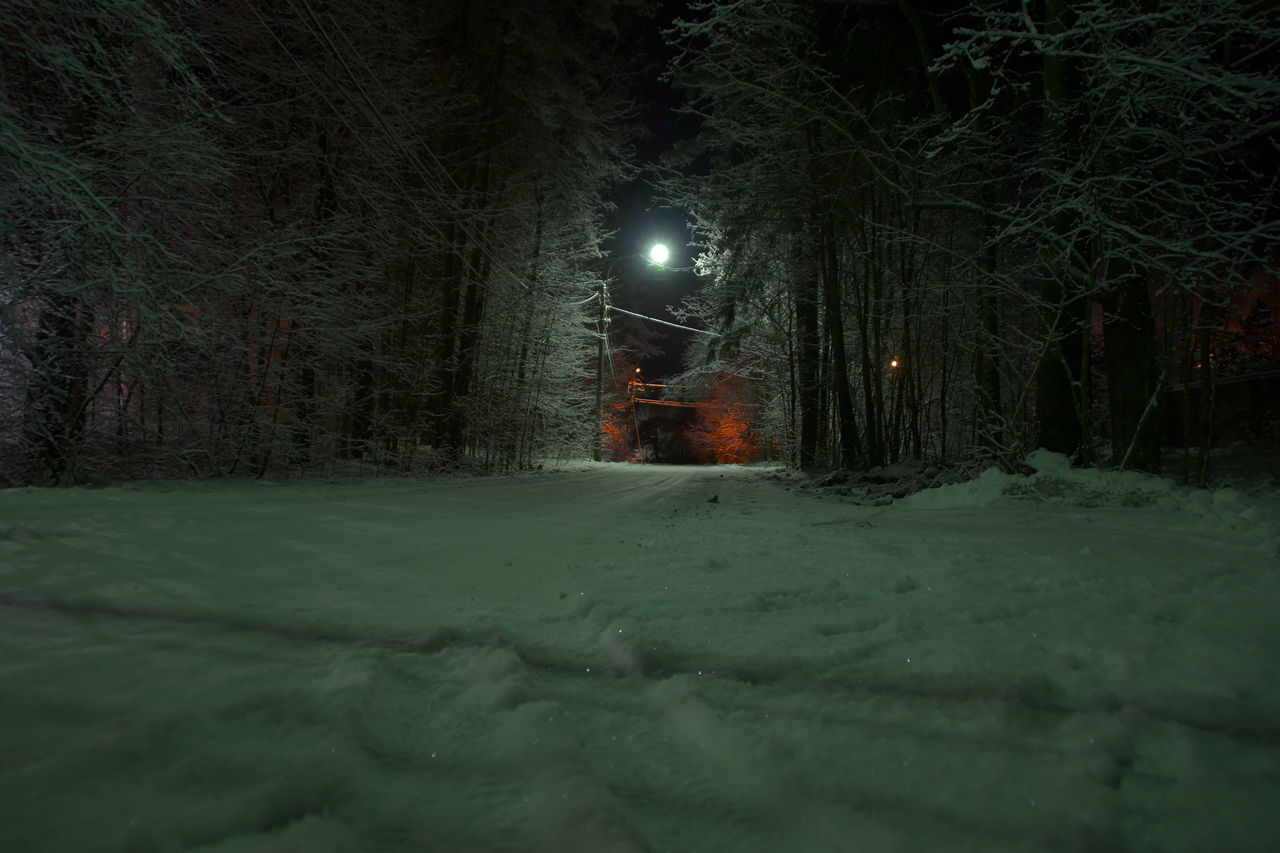 ILLUMINATED STREET LIGHT ON SNOW COVERED TREE