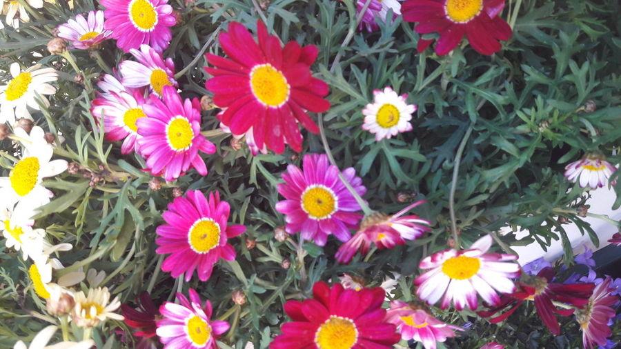 Petal Flower Beauty In Nature Flower Head