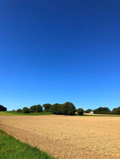 Sky Field Blue