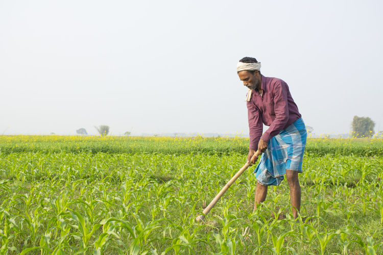Full length of indian farmer working at corn field
