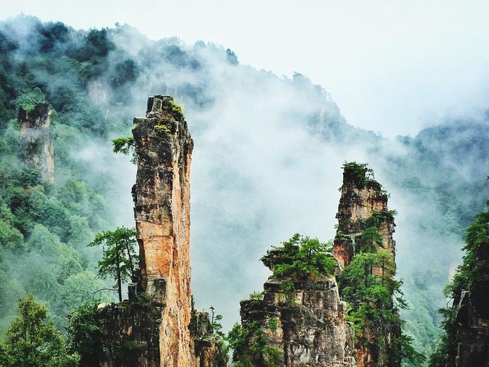 Zhangjiajie National Forest park is a popular tourist destination in the Hunan province, home to striking sandstone and quartz cliffs which inspired the fictional world of 'Pandora' in James Cameron's film, 'Avatar'. Nature Tree Beauty In Nature Mountain zhangjiajie No People