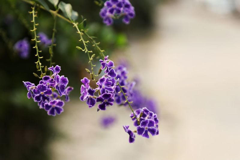 A romantic encounter Flower Purple Flowering Plant Plant Vulnerability  Beauty In Nature Fragility