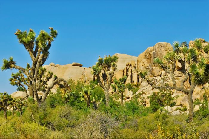 Desert Nature Travel Destinations Clear Sky 29 Palms, California Joshua Tree National Park Landscape Outdoors EyEmNewHere