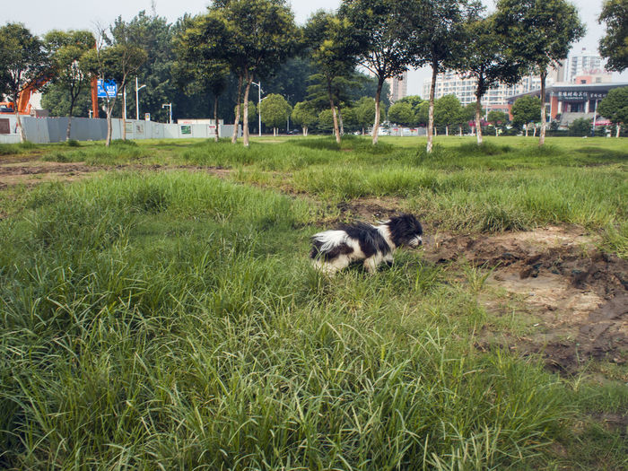 Dog on field against trees