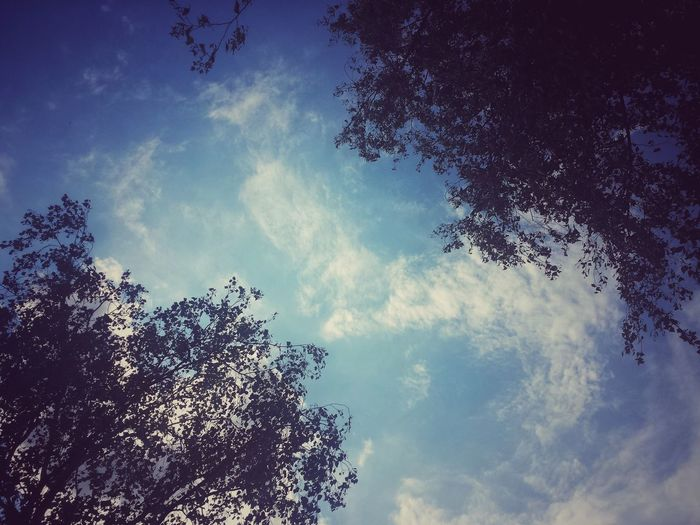 Low Angle View Sky Blue Day No People Outdoors Nature Tree Pixelated Morning Sky Blue Day Leaf Beauty In Nature Live For The Moment