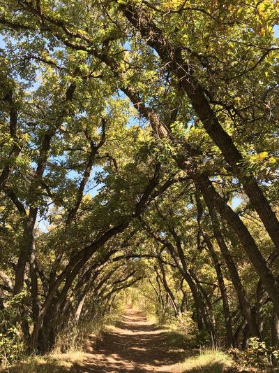 Tree tunel Pathway Trees Landscape Trail Outside Jumbled Tree Nature Tranquility No People Scenics Beauty In Nature Outdoors Branch Day