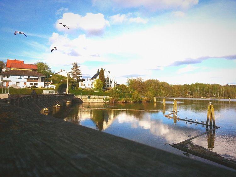 Halden Norway Birds🐦⛅ Sun Taking Photos Sky
