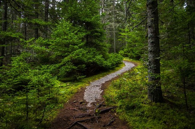 Horizontal composition of curving granite path through the woods and up the hill. Horizontal Path Beauty In Nature Day Forest Green Color Growth Landscape Nature No People Outdoors Pathway Scenics Tranquil Scene Tranquility Tree Tree Trunk Woodland Path Woodland Walk Woodlands Woods