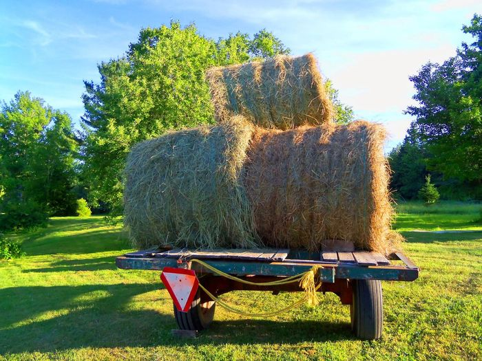 Agriculture Day Family Farm Farm Farm Life Field Green Color Harvest Hay Hay Bales Hay Wagon No People Outdoors Round Hay Bales