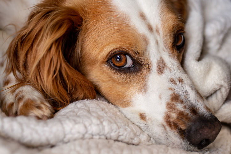 Looking at you! One Animal Mammal Dog Animal Themes Canine Domestic Pets Animal Domestic Animals Relaxation Lying Down Close-up Portrait Animal Body Part Looking At Camera No People Resting Animal Head  Focus On Foreground Animal Eye Napping