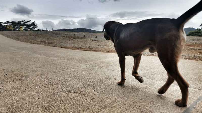 Dog Of The Day Dog Dogs Dogs Of EyeEm Dog Love Dog Life Dog Photography Street Animals Mans Best Friend Mansbestfriend Walking The Dog Walking In The Street Morning Walk