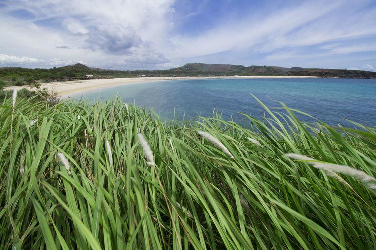 Green grass at tanjung ann beach, kuta mandalika, lombok. scenic view of sea against sky