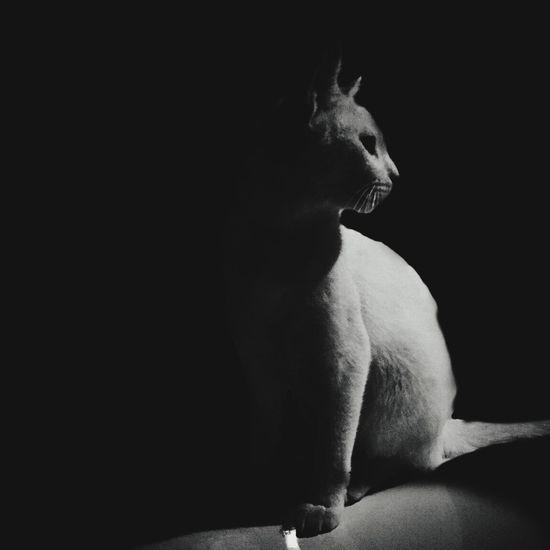 Ray of light Cat Cats