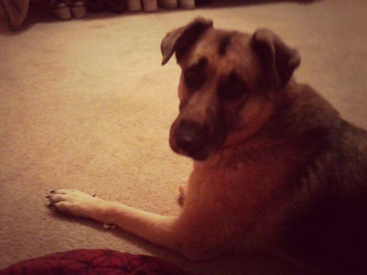 I Love My Doggy