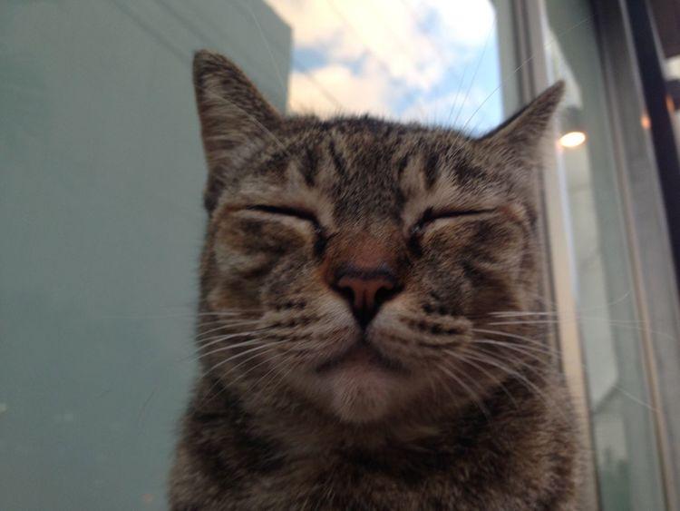 ねこ 可愛い Cute Japan 日本 沖縄 Okinawa 猫 南国のネコ Cat 那覇 Naha-city Snap スナップ へんな顔 Weird Face どうゆう顔しての?😂